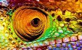 El camaleó té uns ulls molt especials